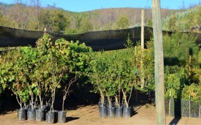 Viverización: una herramienta para la restauración ecológica